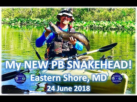 My New PB Snakehead! Eastern Shore, MD