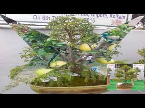 horticultural show at calcutta, bonsai and cacti