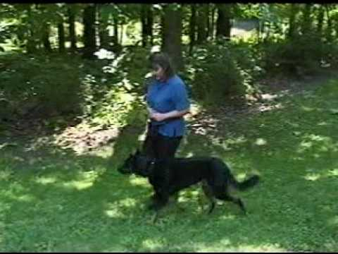 Example Of Using Premack Principle In Dog Training Youtube