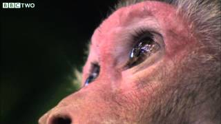 Evolution in Reverse - David Attenborough's Rise of the Animals: Triumph of the Vertebrates - BBC