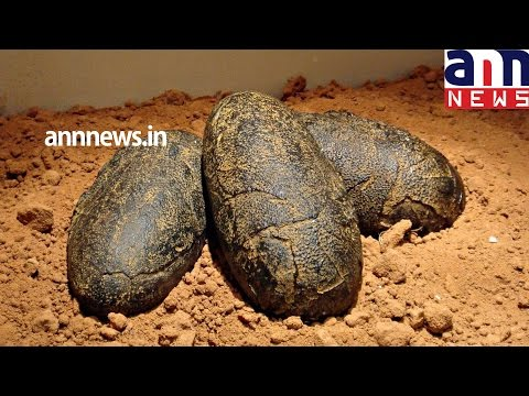 70mnyr dinosaur eggs inside unearthed in Argentina Eggs were found ral years ago at Auca Mahuevo