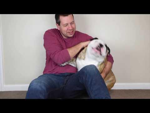 Reuben the Bulldog: Random Stuff