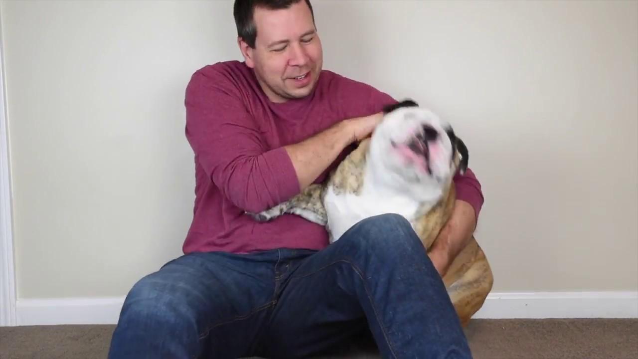 reuben-the-bulldog-random-stuff