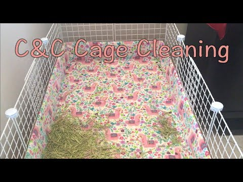 Guinea Pig Cage Cleaning - How to