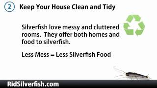 How to Kill Silverfish - 3 Tips for Immediate Results