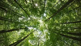 Любов та Віктор Анісімови Щось там в лісі