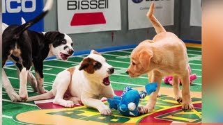 Puppy Bowl IX Line-Up Revealed