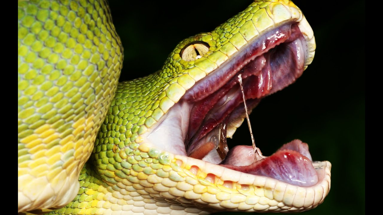 Terrifying Facts About Snakes That Will Give You Nightmares - YouTube