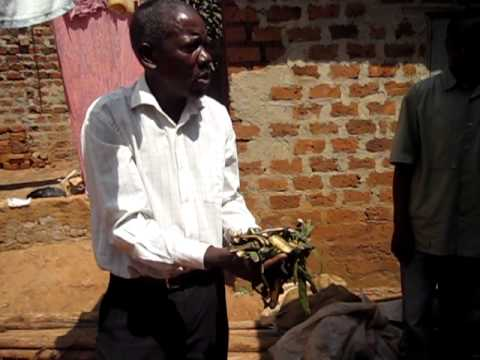 Waste to Wealth: Turning Banana Peels into Animal Feed
