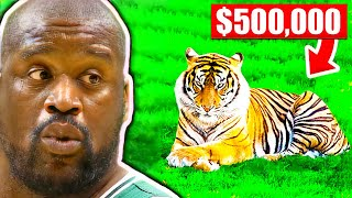CRAZIEST Pets Of NBA Players