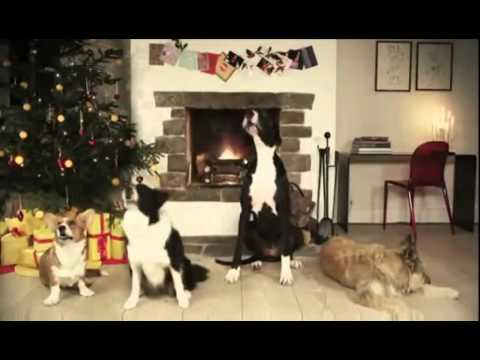 Dogs Bark Jingle Bells