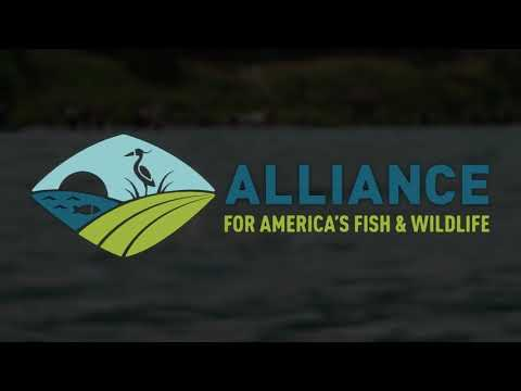Recovering America's Wildlife Act- Learn More...