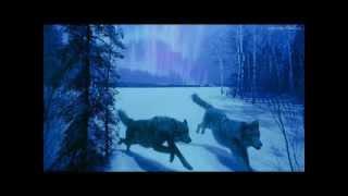 Wilki - moje ukochane zwierzęta