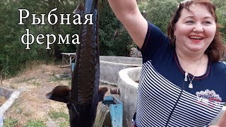 Армения Рыбная ферма