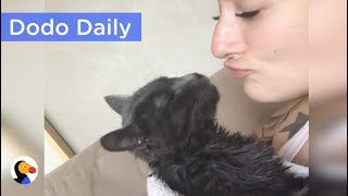 INSPIRING Kitten Who Has Trouble Walking Refuses To Give Up | Best Animal Videos: The Dodo Daily thumbnail