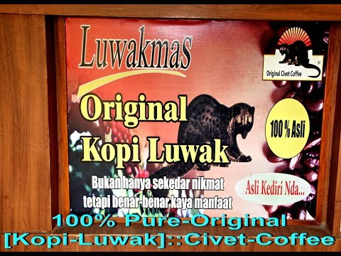 "Unique Indonesian Coffee   """" KOPI--LUWAK """" [ Civet Coffee ]"