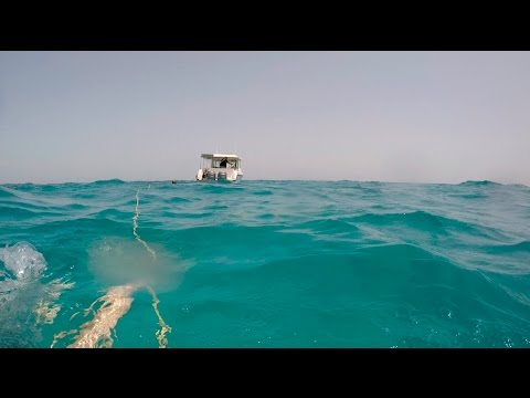 Scuba Diving Jazan Farasan Islands 14 -4-2017