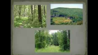 Вырубка лесов! Презентация 26.02.13