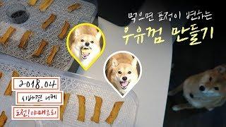 강아지 우유껌 만들기 도전! | 시바견 니케 ( shibainu / 柴犬 )