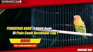 Video PENDATANG BARU TERBAIK!! Hadir Di Piala Candi Borobudur Cup 1 download MP3, 3GP, MP4, WEBM, AVI, FLV Oktober 2018