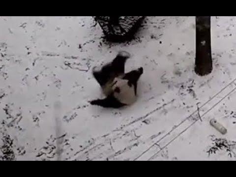 Bei Bei's Best Snow Day Eber! 1-17-18