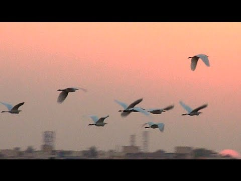 flying birds in the spectacular evening sky youtube