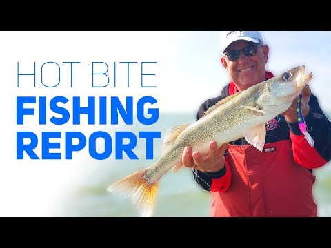 Hot Bite Fishing Report - Western Basin - Lake Erie