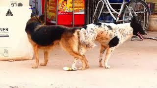 Dog meeting at road way.