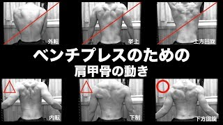 甲骨 肩 ベンチ プレス ベンチプレスで肩に効いてしまう3つの特徴