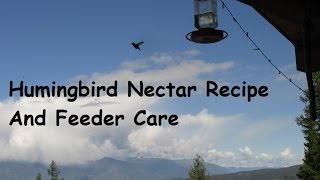 Hummingbird Nectar And Care Of Feeders