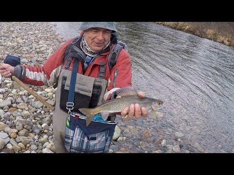 рыбалка клев река печора хариус