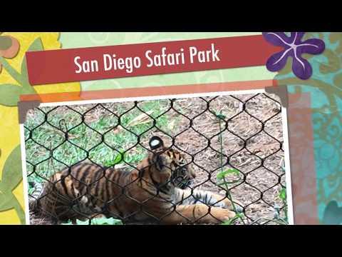 San Diego Safari Park and Golf Cart Breaks Down