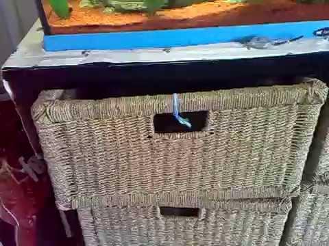 Cat in the underwear drawer