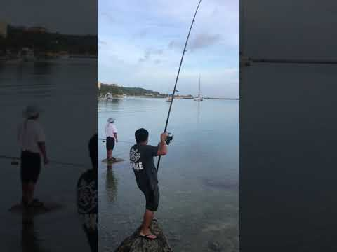 Suprise On The Rise. Gt Guam Fishing.