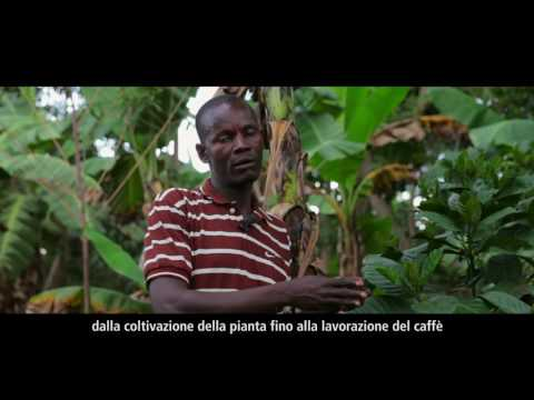 Il caffè in Uganda: la nostra cultura, il nostro patrimonio, la nostra economia