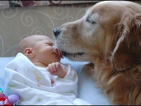 dogs protect and babysitting compilation youtube