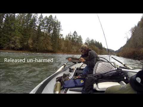 Steelhead Fishing Siuslaw River