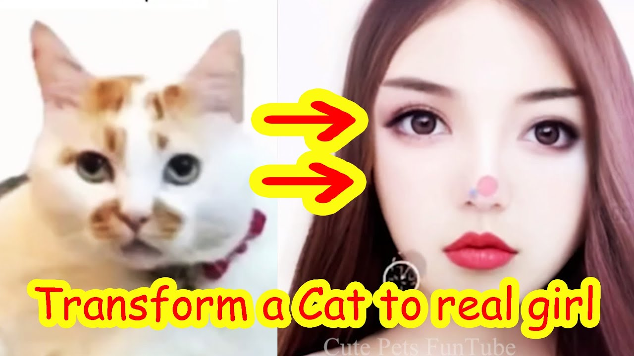 Funny Cats Transform to a Real Beautiful Girl