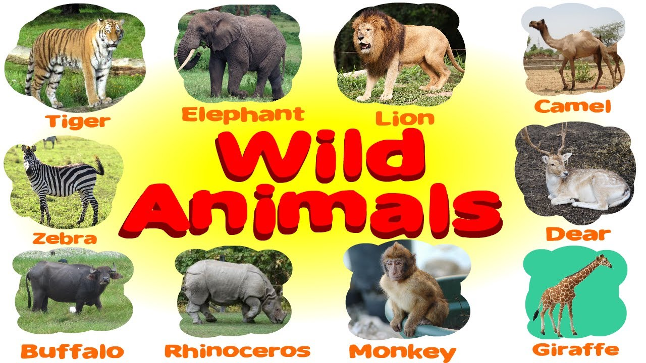 Learn wild animals name and pictures for nursery class ...