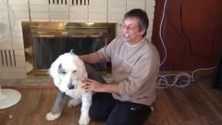 How to Deshed your dog after being Groomed video by GranPaws