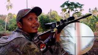 Video Berburu tekukur di kebun kelapa ( Hunting dove ) download MP3, 3GP, MP4, WEBM, AVI, FLV Oktober 2018