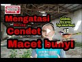 Mengatasi Burung Cendet Macet Bunyi  Mp3 - Mp4 Download