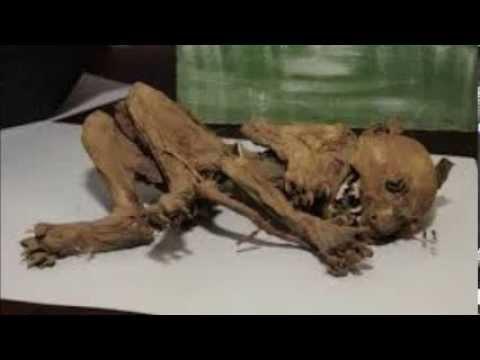Esqueleto del \