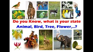 State Animal, State Bird, State Flower, State Tree, State Fruit | Symbols of South Indian States