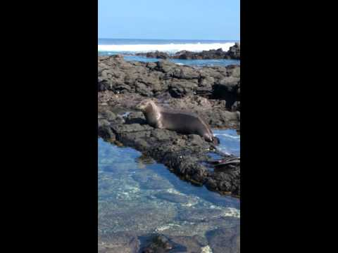 Beautiful seal in hawaii