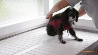 Suits for Pets, послеоперационные попоны для собак и кошек