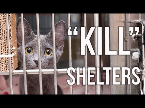 "Why I Support ""Kill Shelters"""