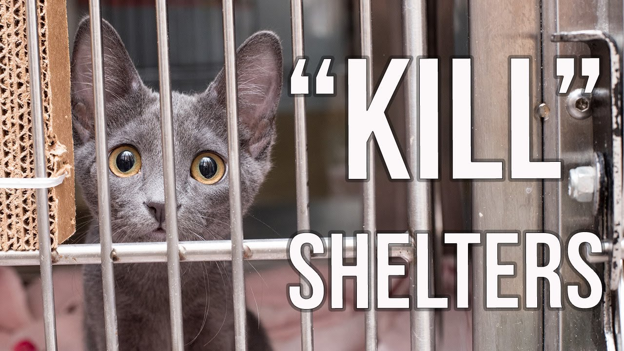 why-i-support-kill-shelters