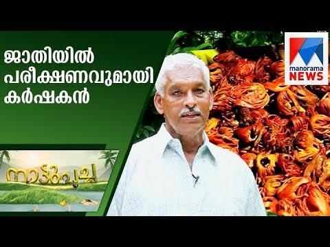Farmer with experiment in Nutmeg farming | Nattupacha  | Manorama News