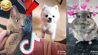 2020 july funny cute tik tok animals compilation(Pt.7)